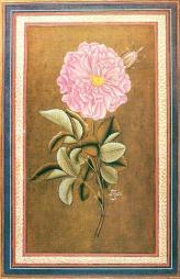 A rose by the Ottoman artist Abdullah Bukharī, c. 1733.